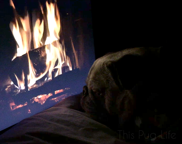 Pug YouTube Yule Log