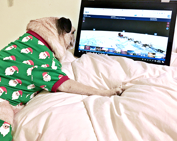 Pug using NORAD Santa Tracker