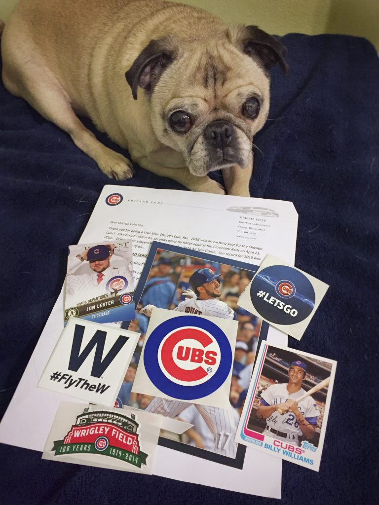 Pug with Chicago Cubs care package swag