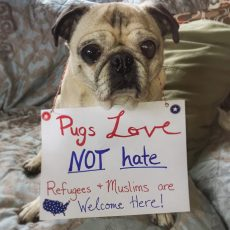 Pug Muslim Refugee Ban Protest Sign
