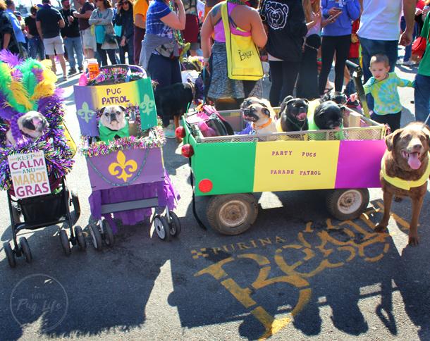 St. Louis Mardi Gras Beggin Pet Parade