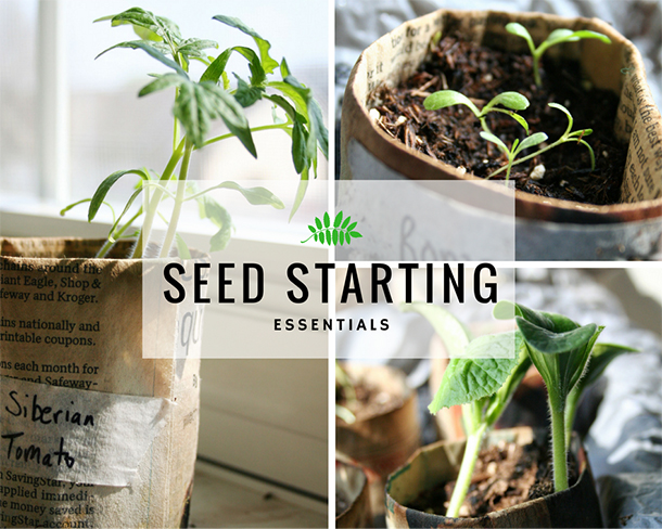 indoor seed starting newspaper seed pots