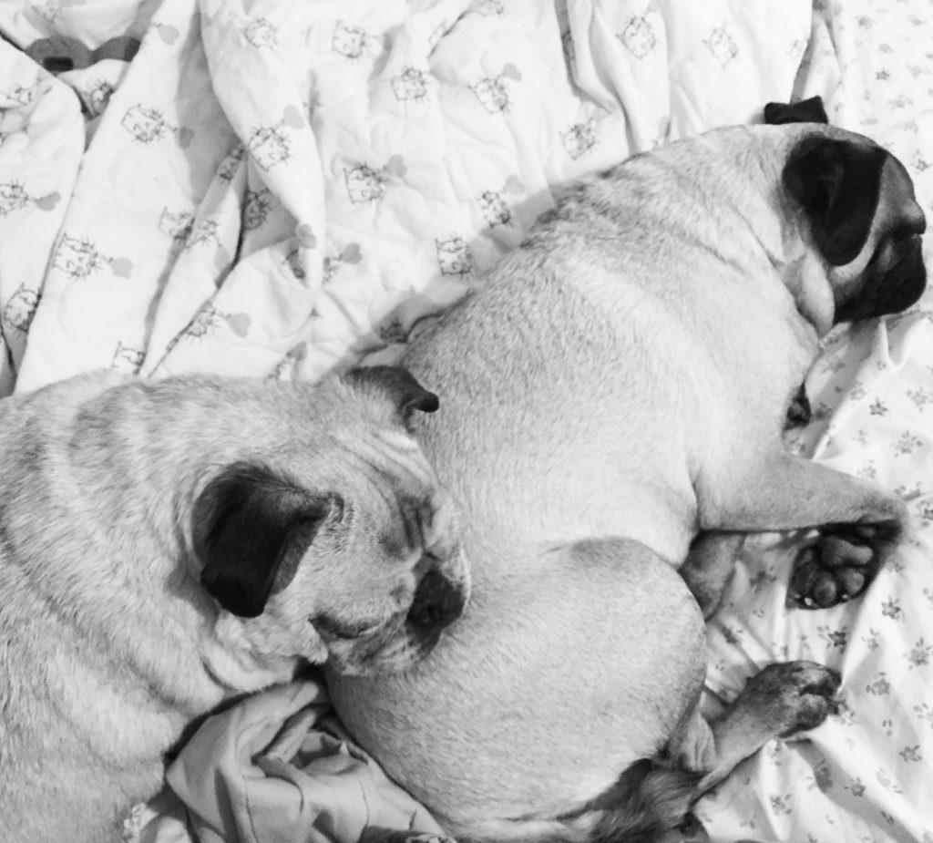 Pug and Pugs butt pillow