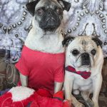 Pugs Celebrate International Women's Day