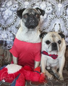 Pugs Women's Day Red