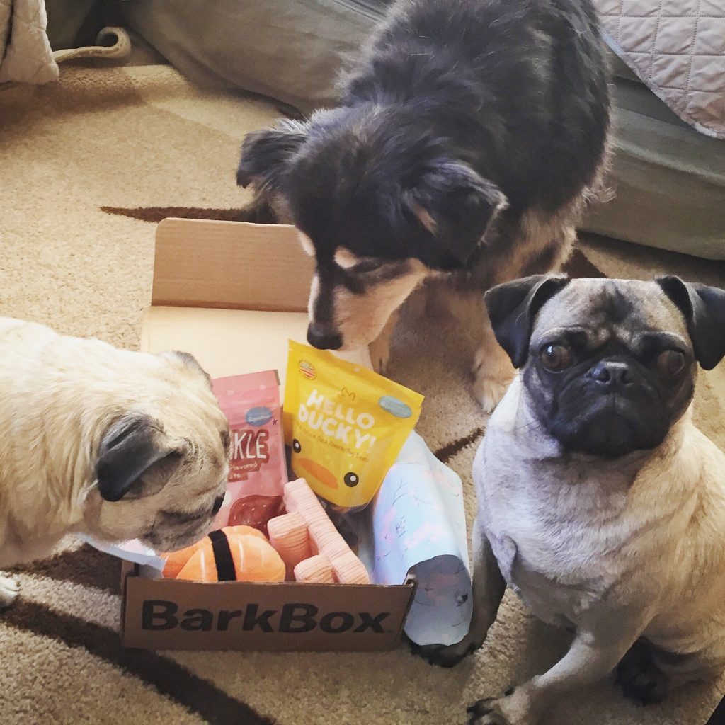 Pug, Pugs and Molly with March Barkbox