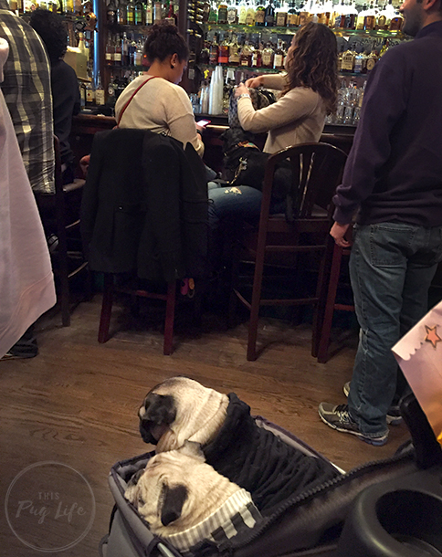 Pugs Take Chicago Clark Street Ale House