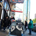 Pugs Take Chicago – Clark Street Ale House