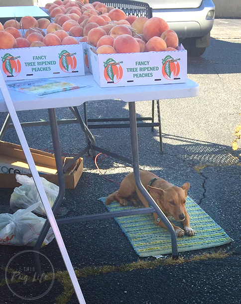 Farmer's Market peaches stand dog
