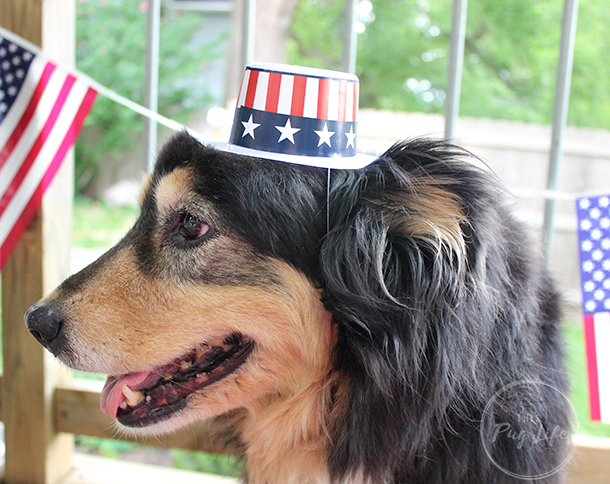 shepherd mix 4th of July hat