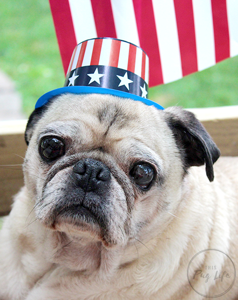 Pug 4th of July hats