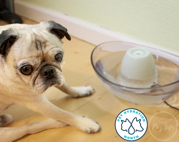 Pet Hydration Month PetSafe Drinkwell Sedona pet fountain