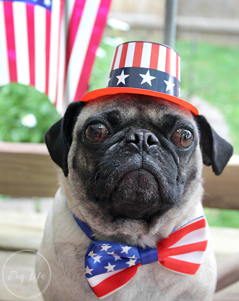 Pugs 4th of July hats