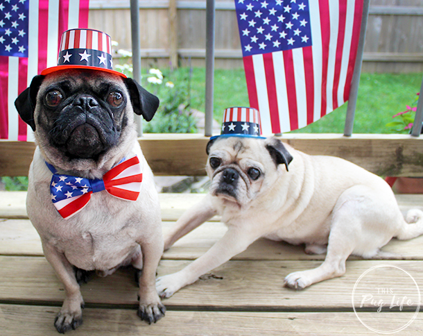 Pug and Pugs 4th of July hats