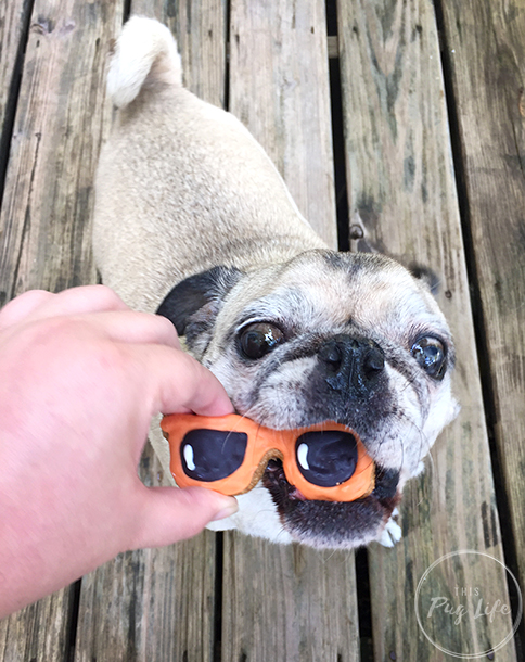 pug sunglasses dog treat