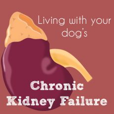 Chronic Kidney Failure illustration