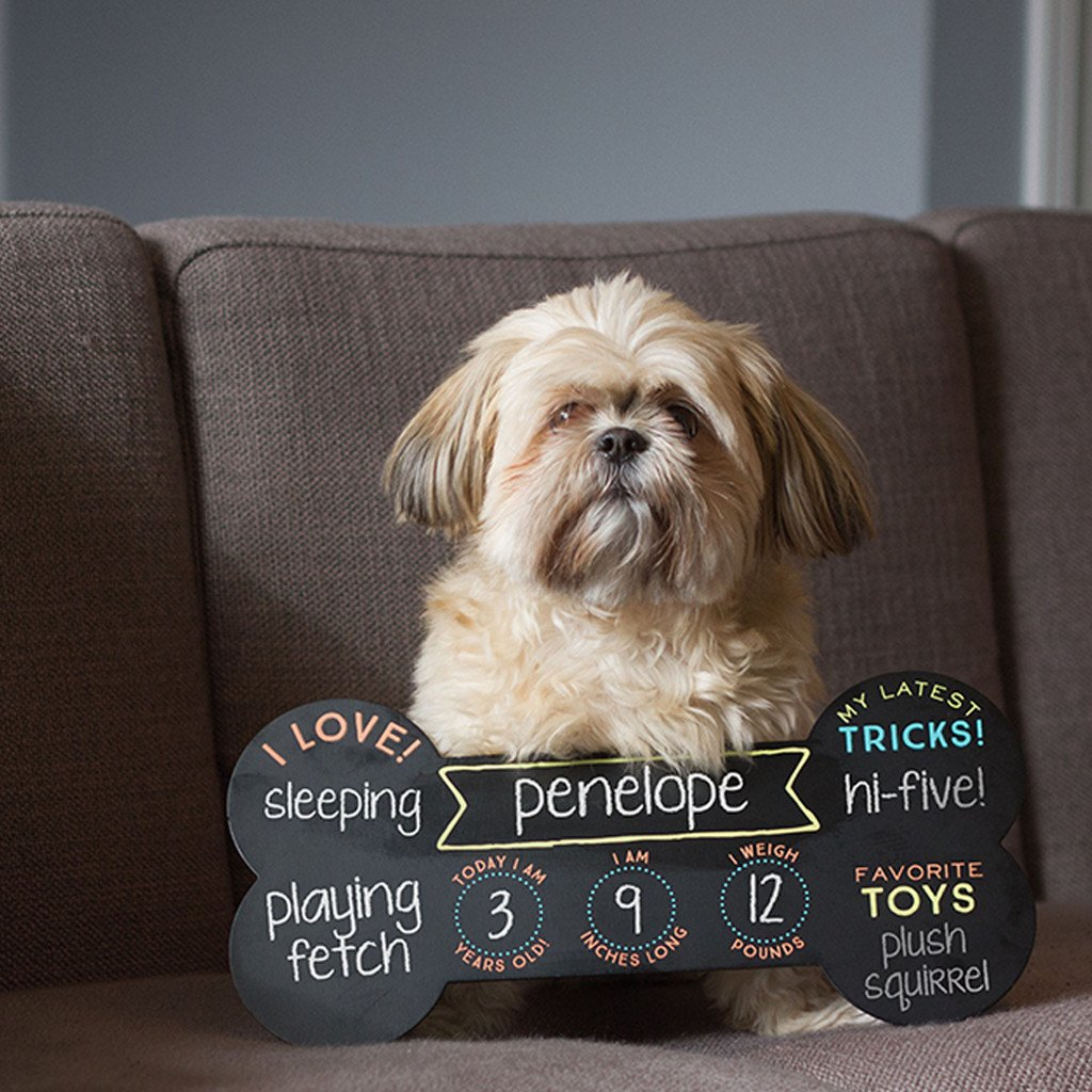 Pet yearly stats chalkboard photo prop