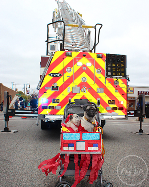 Pugs Firefighter Costumes in front of fire truck