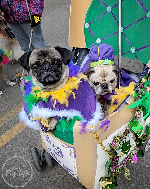 Beggin' Pet Parade St. Louis Mardi Gras